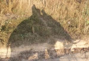 Тень слона