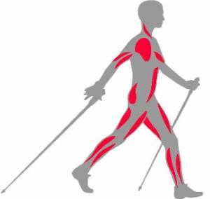 Мышцы при ходьбе