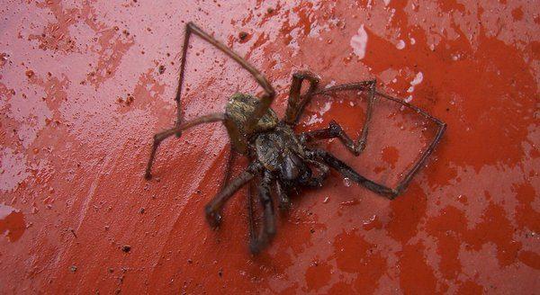 Убить паука во сне