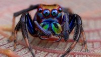 Сны о пауках