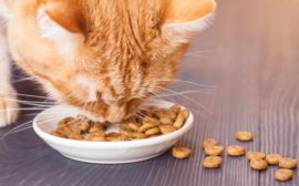 Кошка ест сухой корм