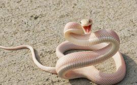 Змея во сне