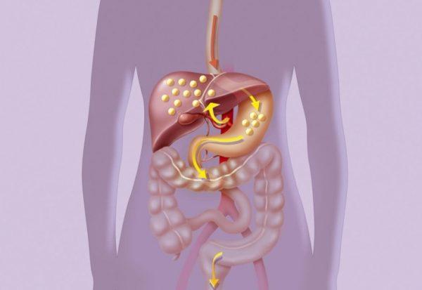 Процесс метаболизма