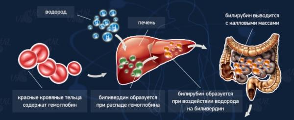 Синтез билирубина