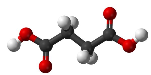 Молекула янтарной кислоты