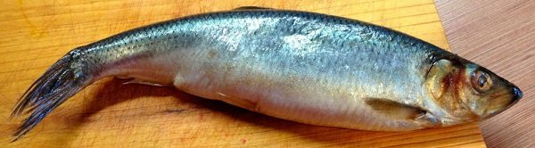 Хорошая рыба сельдь
