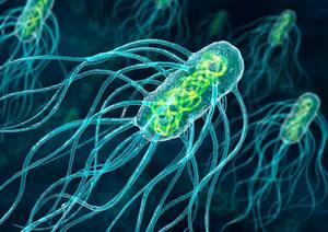 Бактерии в организме