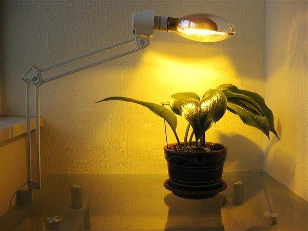 Натриевая лампа