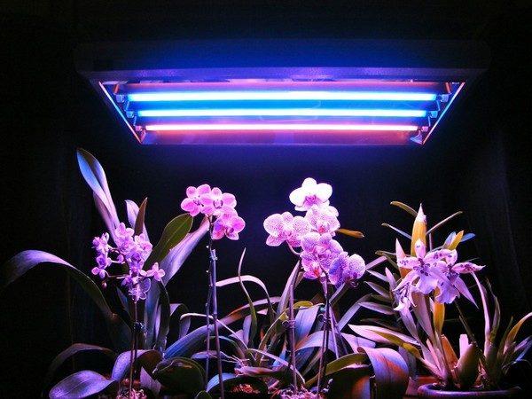 Люминисцентные лампы