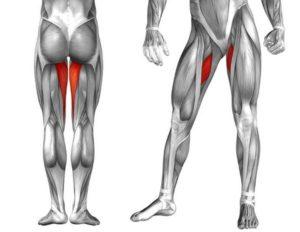мышцы внутренней части бедер