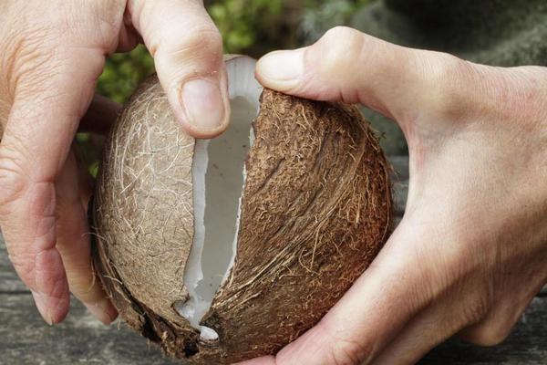Открывание кокоса