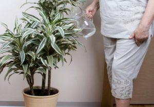 Полив растения