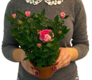 выбор цветка для дома