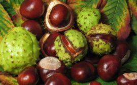 плоды и листья конского каштана
