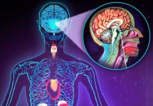 Проблемы в работе эндокринной системы