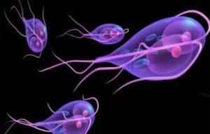Проникновение паразитов в организм