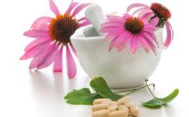 растительный экстракт в таблетках