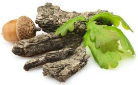 кора и листья дуба