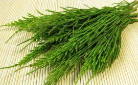 зеленые побеги растения